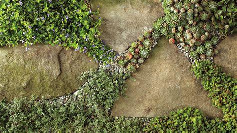 Bodendecker Für Lehmboden by Outdoor Pathway Perennials Martha Stewart