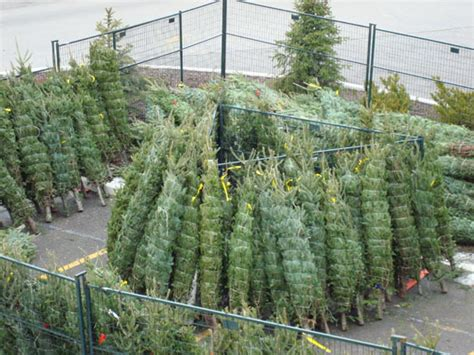 christmas tree lot near me one nana