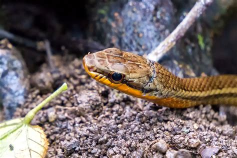 Searching for Snakes in Costa Rica's Wilderness