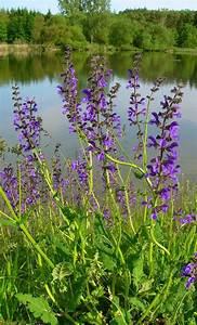 Lang Blühende Pflanzen : dorsiventral ~ Eleganceandgraceweddings.com Haus und Dekorationen