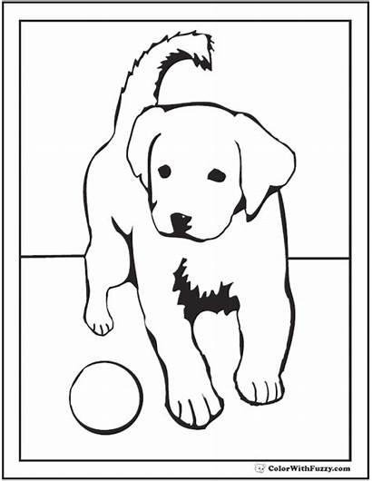 Coloring Labrador Retriever Puppy Pages Dog Golden