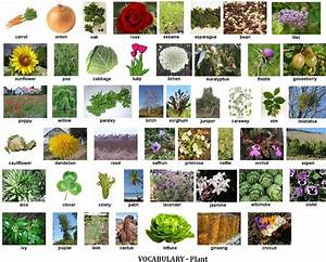 40 Best Images About Plants  Trees  Flowers On Pinterest