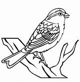 Sparrow Clip Birds Bird Coloring Drawing Kindergarten Clipart Line Worksheet Insects Chipping Iii Fruit Cliparts Animals Cartoon Animal Printable Outlines sketch template