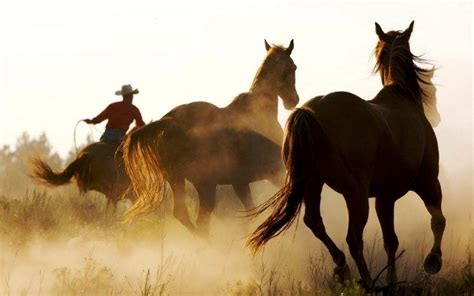 Hours Animal Wallpaper - animals cowboys western wallpapers hd desktop