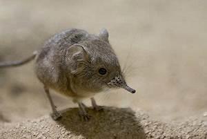 Unterschied Maus Ratte : nagetiere ~ Lizthompson.info Haus und Dekorationen