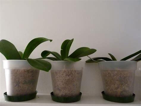 Vasi Trasparenti by Vasi Per Orchidee Vasi Da Giardino Vaso Orchidea