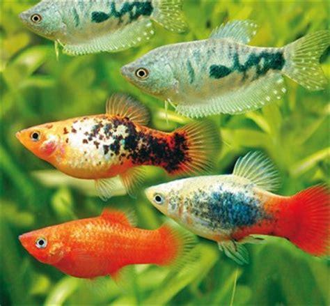 aquarium fische co bei hornbach kaufen