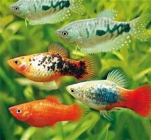 Tiere Für Aquarium : aquarium fische co bei hornbach kaufen ~ Lizthompson.info Haus und Dekorationen