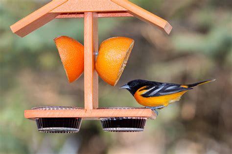 oriole bird feeder ebay