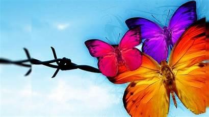 Yellow Butterfly бабочки