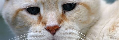 unsauberkeit bei katzen tierheilpraktikerin scharfenberg