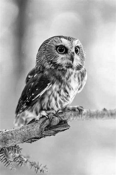 """inventans: """" — """" 