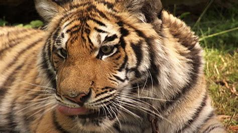 animals tips  preventing exotic animal attacks