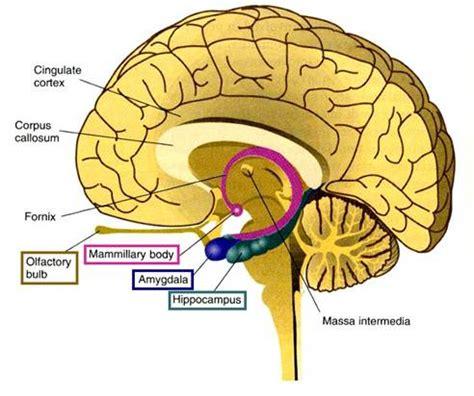 Patiëntenverhaal migraine: kortsluiting in mijn hersenen