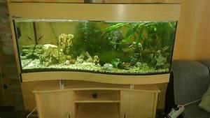 Komplett Aquarium Kaufen : aquaflow technology acf 092 inneneckfilter eckwasserpumpe f r aquarien und fischbeh lter ~ Eleganceandgraceweddings.com Haus und Dekorationen