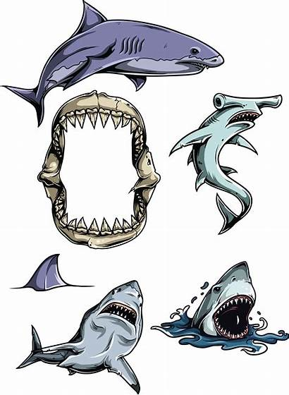 Clipart Sharks Vectors Cgispread Rekin Different Tatoo