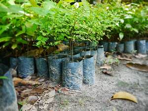 Jungleheroes Sponsors Reforestation Project