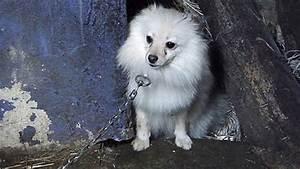 Ebay Kleinanzeigen Ludwigsburg : leonberg polizei rettet 114 hunde und katzenwelpen hundenachrichten betr ger hundewelpen ~ Buech-reservation.com Haus und Dekorationen