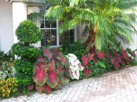 arranging flower beds arranging caladiums in flower beds small but effective ideas