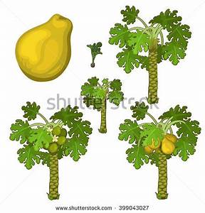 Papaya Tree Stock Photos, Images, & Pictures | Shutterstock