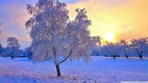 Landscapes trees winter snow sunset sunrise hdr wallpaper ...