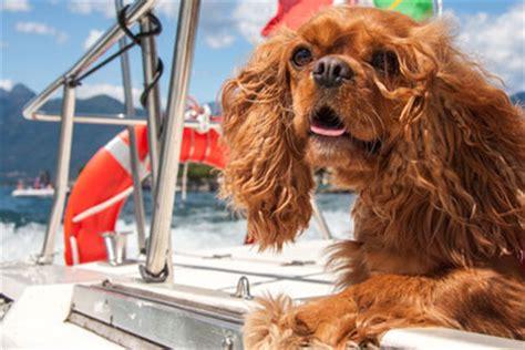 lago maggiore mit hund urlaub mit hund am lago maggiore informationen