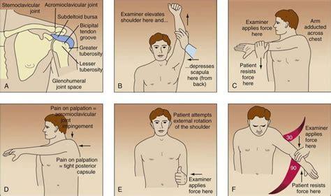 Shoulder Pain | Musculoskeletal Key