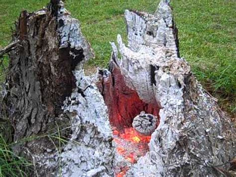 Removing Trees From Backyard by Burning Tree Stumps Phase Vi Backyard Tree Removal