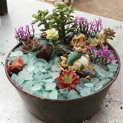 Mermaid Garden Succulent Gardens Magical Bright