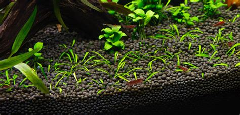 substrate for planted aquariums