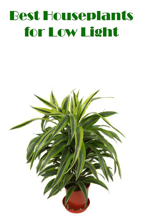 best houseplants for low light mom foodie