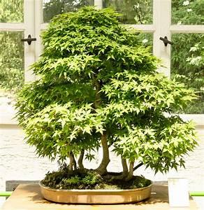 bonsaiausstellung in munchen nymphenburg 2 With whirlpool garten mit acer palmatum bonsai