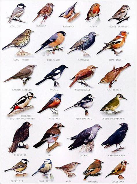garden bird chart chart bird and feathers