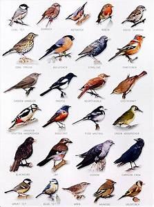 Bird Identifier Chart Garden Bird Chart Birds Animals Bird Identification