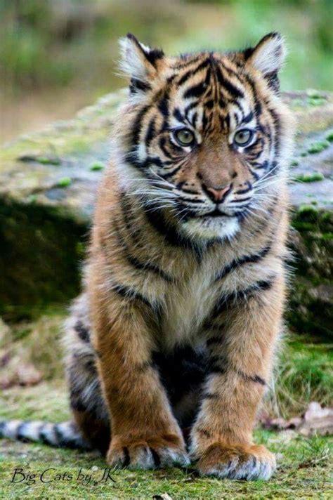 Best Images About Adorable Animals Pinterest