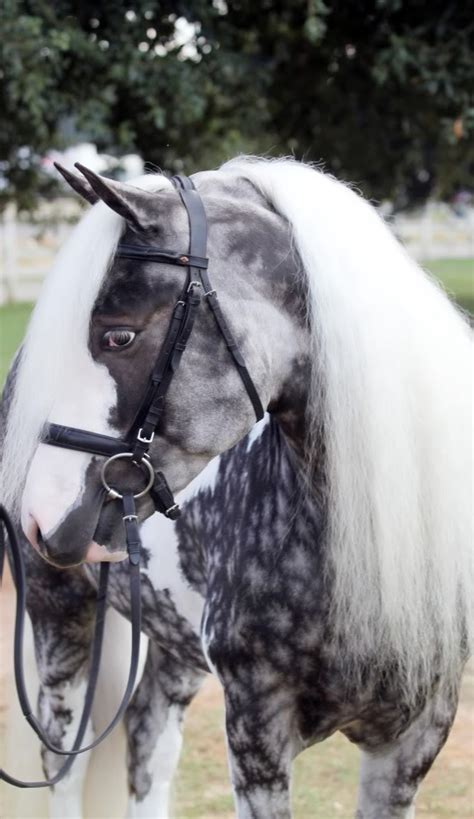 horses colors unusual dapple silver pinto most ever chocolate seen