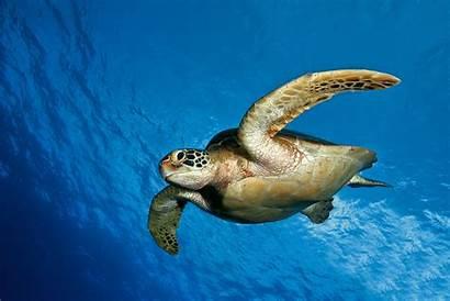 Turtle Sea Wonderful Wallpapertag