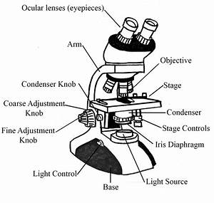 Diagrams Of Microscope Printable