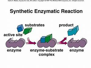 Of An Enzyme Substrate Reaction