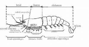 Arthropod Diagram