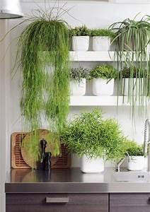Cactus Sans Epine : rhipsalis cassutha plante verte cactus sans pines ~ Melissatoandfro.com Idées de Décoration