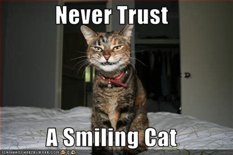 funny   cats cute cats pictures funny cat