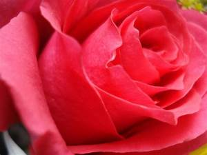 Rose Flower Wallpapers Image - Wallpaper Cave