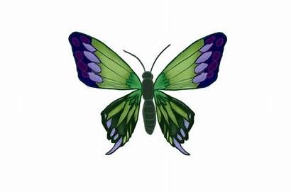 Butterfly Animated Gifs Animation Fluttering Butterflies Clip