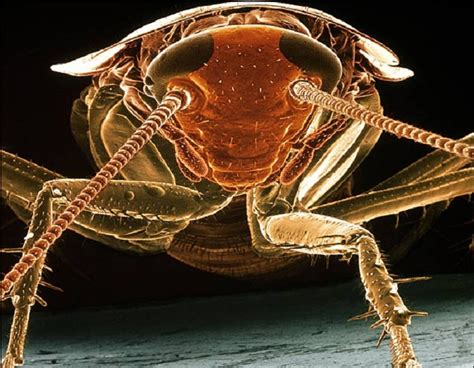 steve gschmeissners incredible microscope   insects