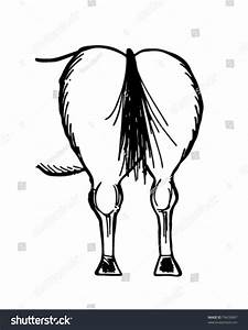 Horse Rear End - Please Accept Our Kindest Regards