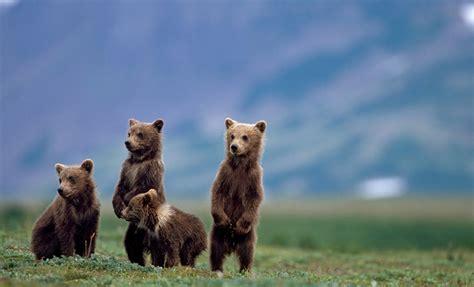 Alaska: Denali to Kenai Fjords | National Geographic ...
