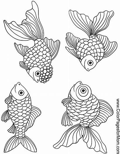 Coloring Ocean Pages Fish Adult Sea Printable