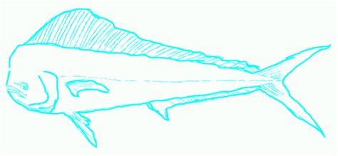 Dolphin Fish Drawing
