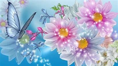 Flower Flowers Wallpapers Butterfly Butterflies Desktop Backgrounds